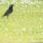 沖縄は鳥枯れ中