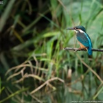 鳥の声が沢山