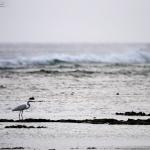 サギたちの海岸