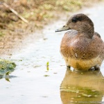 畑ポイントの冬鳥たち #1