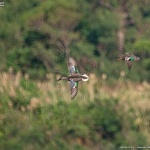 野鳥を撮ってみた #1
