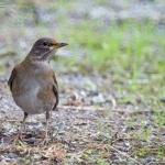 野鳥を撮ってみた #2