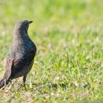 街中の野鳥たち