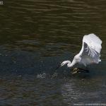 ため池の鳥たち