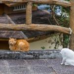 ネコと公園