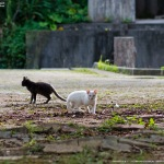 ネコの公園