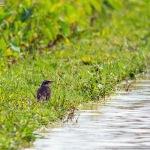 畑地帯の小鳥たち