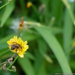 FA77で昆虫 #2