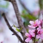 春を感じる花たち