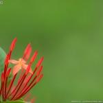 熱帯睡蓮が撮りたい