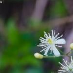初見の草花